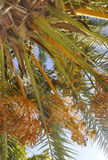 Thassos, August 20th: Palm background in Potos village from Thassos island in Greece Stock Photos