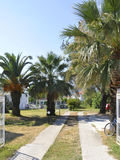 Thassos, August 20th: Palms Garden in Potos village from Thassos island in Greece Royalty Free Stock Photo