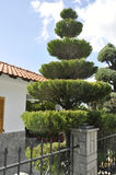 Thassos, August 23th: Traditional House Garden in Theologos Village from Thassos island in Greece Stock Image