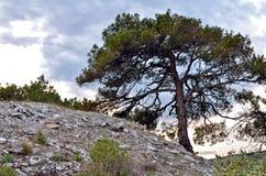 Thassos Griechenland Lizenzfreie Stockbilder