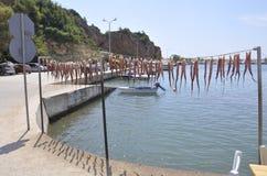 Thassos, Sierpień 20th: Ośmiornicy osuszka w Potos wiosce od Thassos wyspy w Grecja Obraz Stock