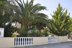 Thassos, Sierpień 20th: Palmy Uprawiają ogródek w Potos wiosce od Thassos wyspy w Grecja Fotografia Royalty Free