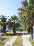 Thassos, Sierpień 20th: Palmy Uprawiają ogródek w Potos wiosce od Thassos wyspy w Grecja Zdjęcie Royalty Free