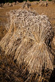 Thatch Royalty Free Stock Images