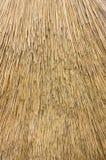 камышовый thatch Стоковое фото RF