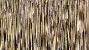 Thatch background Stock Image