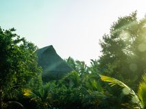 A thatch hut in the jungle. A thatch hut in the dense jungle with sun shining from the side stock photography