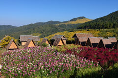 Thatch Huts and Flowers field Royalty Free Stock Photography