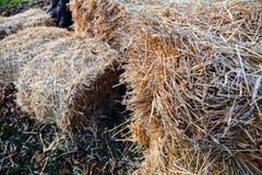 thatch Stock Photo