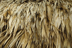 Thatch Roof. From a Hut royalty free stock images