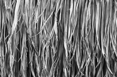 Thatch roof. Background, black and white image royalty free stock photo