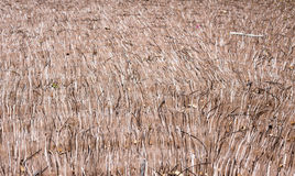 Thatch roof background pattern make with dry grass. Or hay royalty free stock photo