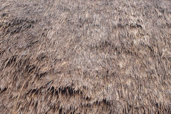 Thatch roof background Royalty Free Stock Photo