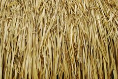 Thatch Roof Texture. Thatch Roof Background Texture stock photography