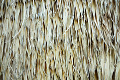 Thatch Royalty Free Stock Photography