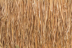 Thatch roof. Tropical thatch roof in Thailand royalty free stock photo