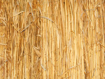Thatch wall. Shot in Ukraine royalty free stock images