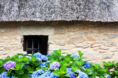 Thatched cottage and hydrangeas Stock Photography