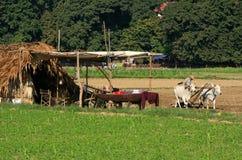 Thatched hut in a farm field, Amarapura, Myanmar Royalty Free Stock Image