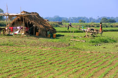 Thatched hut in a farm field, Amarapura, Myanmar Stock Photography