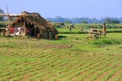 Thatched hut in a farm field, Amarapura, Myanmar Stock Photography