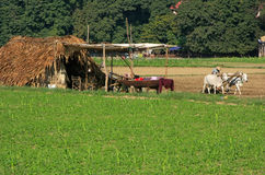 Thatched hut in a farm field, Amarapura, Myanmar Stock Images