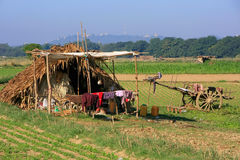 Thatched hut in a farm field, Amarapura, Myanmar Royalty Free Stock Image