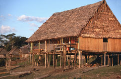 Thatched hut on Peruvian Amazon. A thatched hut along the Rio Tayaho, a tributary of the Amazon a day upstream from Iquitos, Peru. Animals roam under the house stock photo
