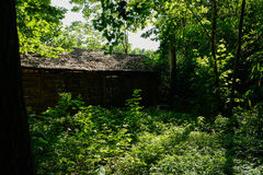 Thatched hut in plants and trees of sunny summer afternoon Stock Photo