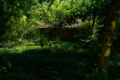Thatched hut in shady woods of sunny summer afternoon Royalty Free Stock Images