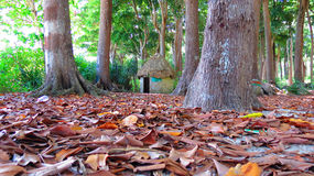 Thatched hut between trees Royalty Free Stock Image