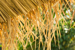Thatched roof. Closeup background texture Royalty Free Stock Photography
