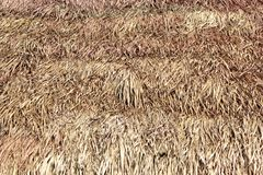 Thatched roof of a cottage made from dry grass Stock Photography