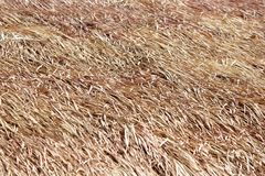 Thatched roof of a cottage made from dry grass Stock Image