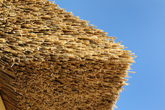 Thatched roof. Detail from a thatched roof near Timmendorfer Strand at baltic sea Royalty Free Stock Image