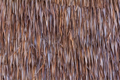Thatched Roof Stock Image