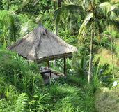 Thatched Roof Gazebo. Bali - May 2014  A thatched roof gazebo amidst the greenery with a view of the terraced padi fields in Ubud, Bali Royalty Free Stock Image