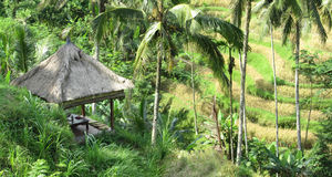 Thatched Roof Gazebo. Bali - May 2014 A thatched roof gazebo amidst the greenery with a view of the terraced padi fields in Ubud, Bali royalty free stock images