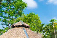 Thatched roof house and a green garden with blue sky in countrys Stock Image