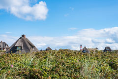 Thatched-roof houses hidden in beach grass covered dunes at coast of the island of Sylt, Germany with red and white lighthouse royalty free stock image