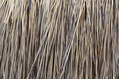 Thatched roof. The leaves of brown thatched roof, used as background Royalty Free Stock Image