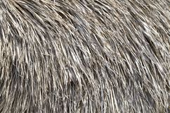 Thatched roof of old umbrella closeup royalty free stock photos