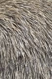 Thatched roof of old umbrella closeup stock image