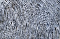 Thatched roof of umbrella closeup. Thatched roof of old umbrella closeup royalty free stock images