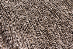 Thatched roof texture. Royalty Free Stock Photography
