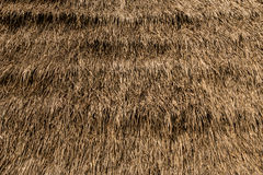 Thatched roof texture. Image of Thatched roof texture Royalty Free Stock Image
