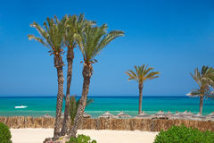 Thatched sunshades and palm trees Royalty Free Stock Photo