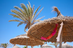 Thatched sunshades and palm trees Royalty Free Stock Photography