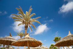 Thatched sunshades and palm trees Stock Images