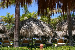 Thatched sunshades at resort. A view of several large, thatched sunshades or umbrellas at a tropical resort Stock Photos